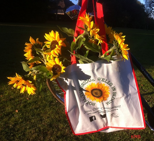 Royal Tunbridge Wells in Bloom - launch 2019 - sunflowers in RTWiB campaign bag